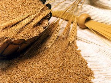 Насіння пшениці з колосками