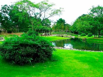 Трава для парков
