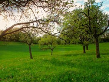 Трава для садів
